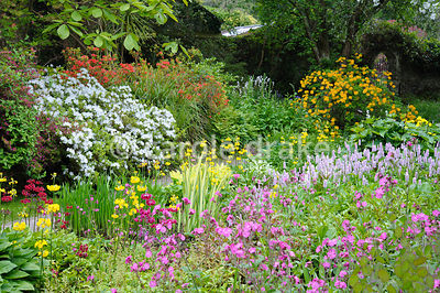 Lush, streamside planting includes persicaria, variegated iris, hostas, lots of varieties of candelabra primulas such as yell...