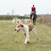 The Cottesmore Hunt at Waterloo Farm 15/12