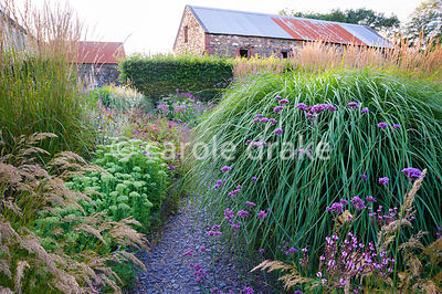 A slate path winds between clumps of tall miscanthus, Verbena bonariensis, V. hastata and sedums in the Barn Garden. The Bay ...