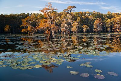 Lily Pads and Cypress Trees