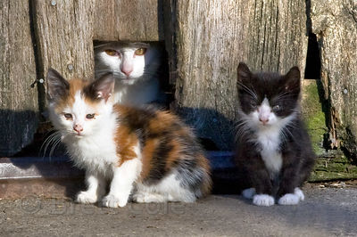 Barn cats on a farm in the Adirondacks, New York