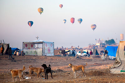 Hot air balloons in Pushkar, Rajasthan, India