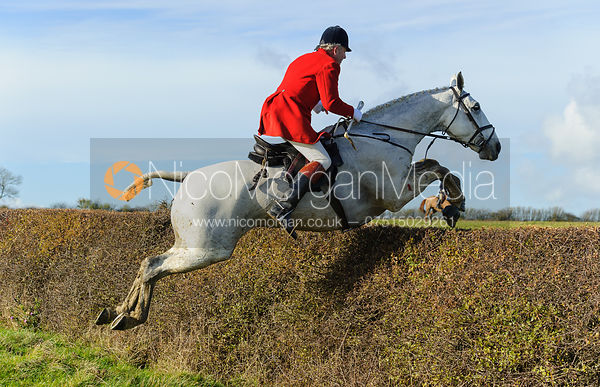 Jumping a hedge above Wilson's - The Cottesmore Hunt at Braunston, 12-11-13.