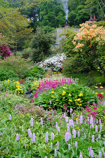Smoke rises from the chimney of the head gardener's cottage beyond lush streamside planting including hostas, candelabra prim...