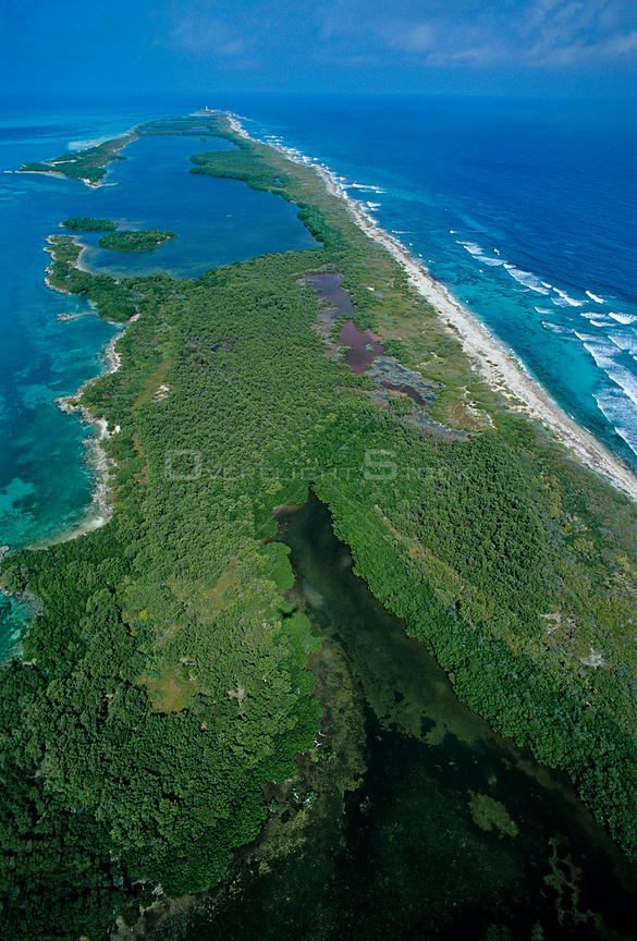 Aerial view of Red mangrove (Rhizophora mangle) forest, Contoy Island National Park, Mesoamerican Reef System, near Cancun, C...
