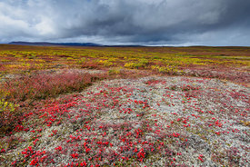 Storm over Tundra | Denali Highway, AK