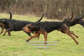 Kent and Surrey Bloodhounds Fishfold Stables Meet 3rd Feb 2013. © Julian Portch (julianportch@hotmail.com - 07768 398333)