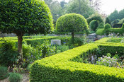 Formal courtyard garden on the west side of the house features box hedging, standard clipped Portugese laurels, Prunus lusita...