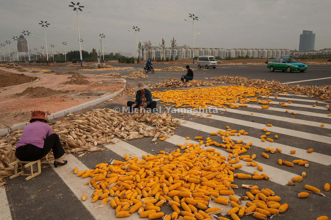 Local Farmers shucking corn on newly built roads of Solar City..