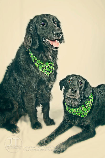 Dogs.StPattys.old