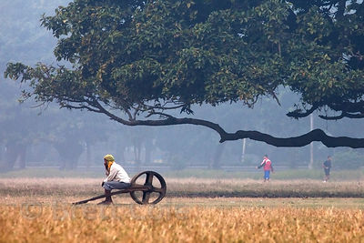 A man sits on a cart in a grassy field near a large tree on the Maidan (Central Park), Kolkata, India.