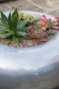 Circular silver metal planter of succulents. Bourton House, Bourton-on-the-Hill, Moreton-in-Marsh, Glos, UK