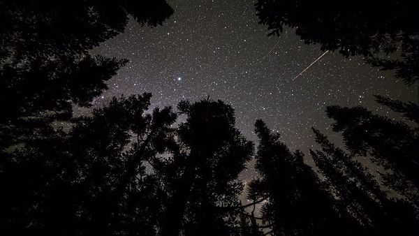 Medium Moving Shot: The Milkyway Galaxy Over Yosemite Pine Tree Tops