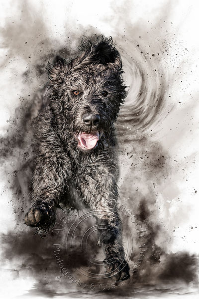 Art-Digital-Alain-Thimmesch-Chien-80