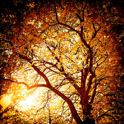 Sunset_Autumn