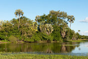 palm-fringed lake, Gorongosa National Park, Mozambique