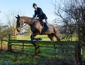 Tim Brown jumping a hunt jump away from the meet - The Cottesmore Hunt at Pickwell Manor 28/12