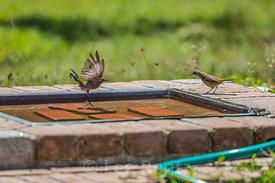 Bird Bath in Dry Tortugas National Park