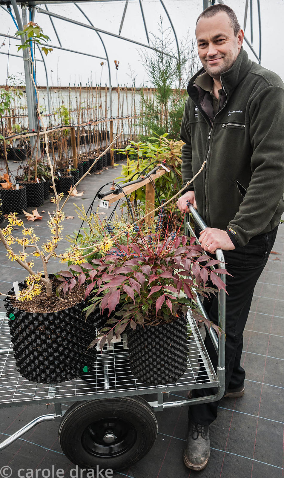 Chris Trimmer, National Trust Plant Conservation Manager, Devon, UK with trolley of shrubs including Hamamelis mollis 'Wisley...