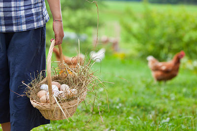 boy with basket of fresh eggs and chicken on farm, Memmingen, Bavaria, Germany