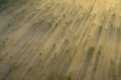 Aerial view of a fog over bog, with golden sunrise light,  Tartumaa, Estonia, May 2013.