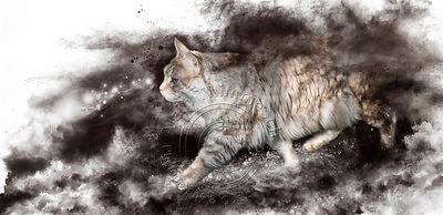 Art-Digital-Alain-Thimmesch-Chat-29