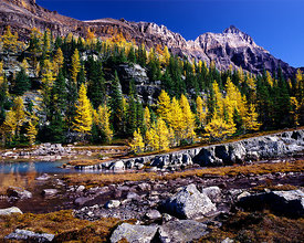 Autumn Bands, Lake O'Hara