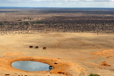 Aerial view of African elephants (Loxodonta africana) and African buffalo (Syncerus caffer) at a water hole during the dry se...