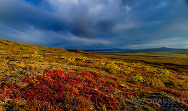 Red, Yellow, and Blue | Denali Highway, AK
