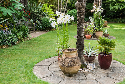 Pots clustering around the base of soaring Chusan palms, Trachycarpus fortunei, in the Sunken Garden, planted with agaves and...