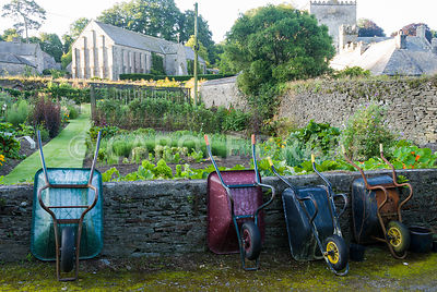 Walled kitchen garden, once part of the abbey, with 13th century Great Barn of Buckland Abbey rising above and wheelbarrows n...