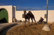 demonstration of old farming methods, Guellala museum, Jerba, Tunisia