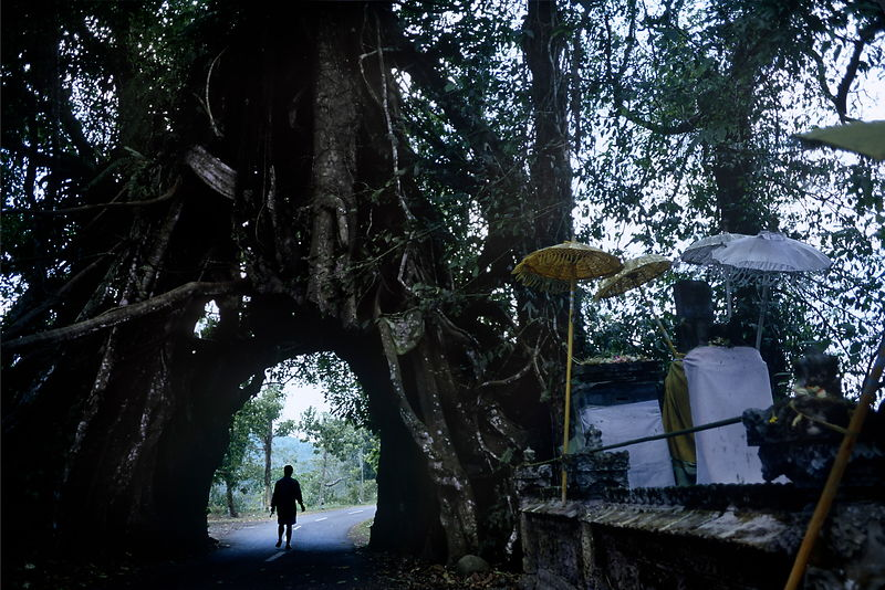 Double banyan tree arch