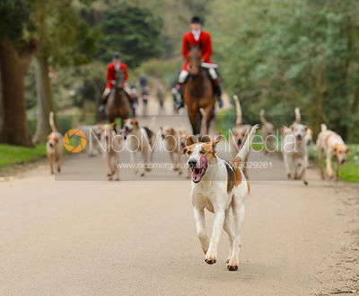 The Belvoir and South Shropshire Hunts at Belvoir Castle 11/3