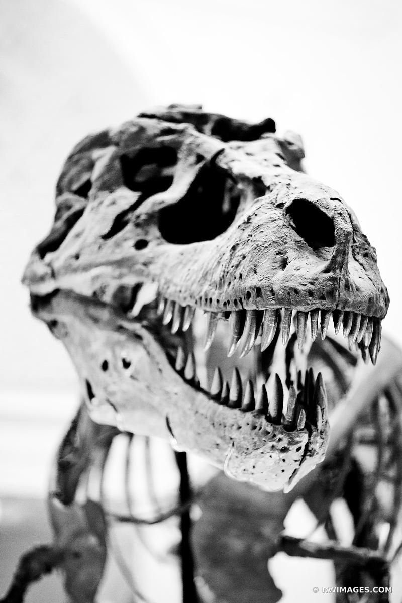 SUE DINOSAUR FIELD MUSEUM CHICAGO BLACK AND WHITE