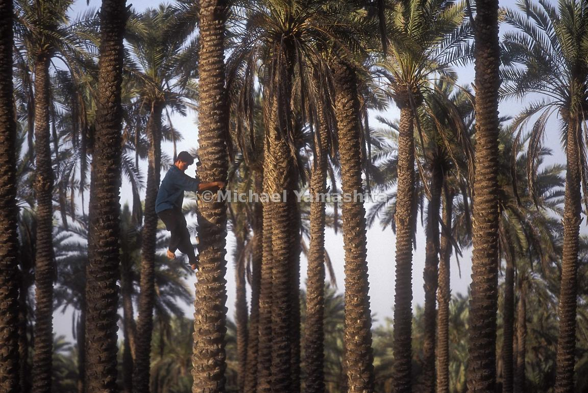 The city of contains Palm Plantations and is located between Iran and Kuwait.