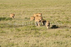 lion_plains_walk_02232015-11