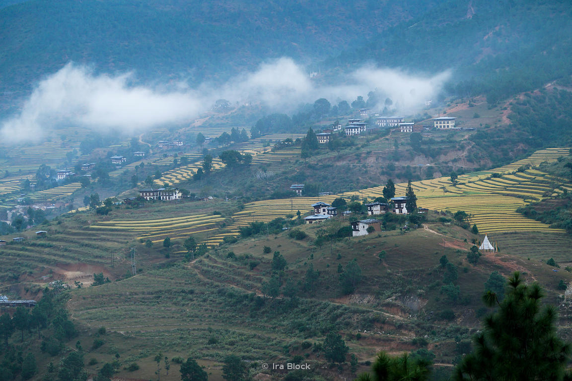 Morning view of terraced rice fields and the town, Khuruthang in Punakha, Bhutan.