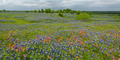 Ennis Wildflower Panorama
