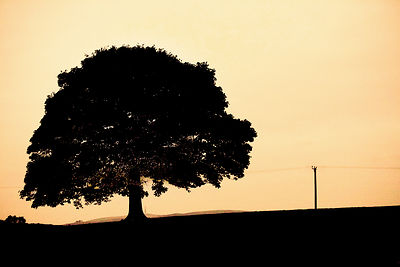 BEECH_TREE_SUNSET-2