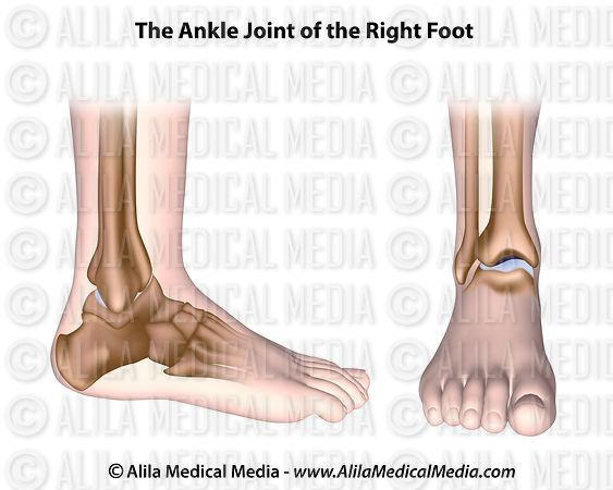 alila medical media ankle joint unlabeled diagram bottom of foot anatomy diagram bottom of foot anatomy diagram bottom of foot anatomy diagram bottom of foot anatomy diagram