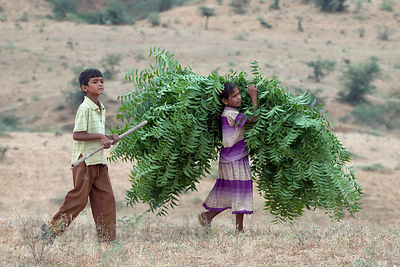 Children carry camel fodder through a field in Pushkar, Rajasthan, India