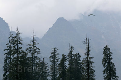 Paraglider over old-growth forest in the Solang Valley , Manali, India