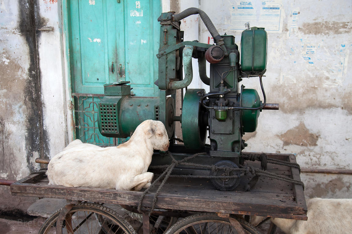 A goat sitting on a cart with machinery in Udaipur, Rajasthan, India