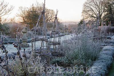 Frosty remains of herbaceous plants in the Rainbow Garden in beds edged with lavender. Kingston Maurward Gardens, Dorchester....
