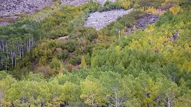 Wide Shot: Slow Dolly Shot Of Fall Colors Changing On A Mountain Slope
