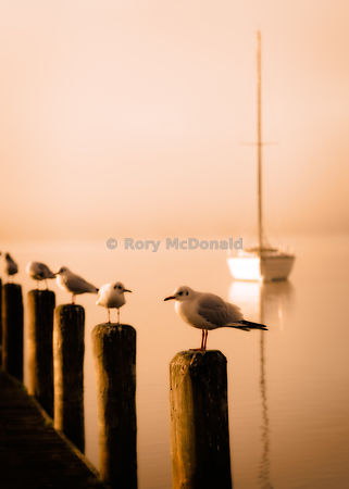 Seagulls perching