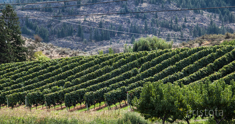 Highway 97 in the Okanagan Valley