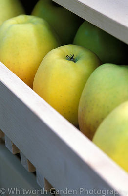 Apples in a ventilated storage drawer. © Rob Whitworth