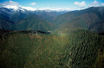 D - Aerial looking down onto mixed Beech forest, Carpathian Mountains, Romania 10/99